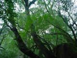 苔や原生林の濃い緑が印象的