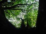 根の下から木を眺める