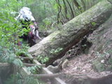 狭く険しい山道